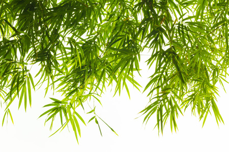 Bamboo leaves on white background Stock Photo