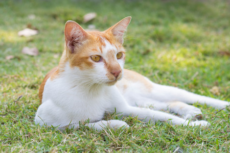 Cat relaxing outdoor on the grass