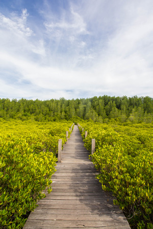Mangrove forest with wooden bridge photo