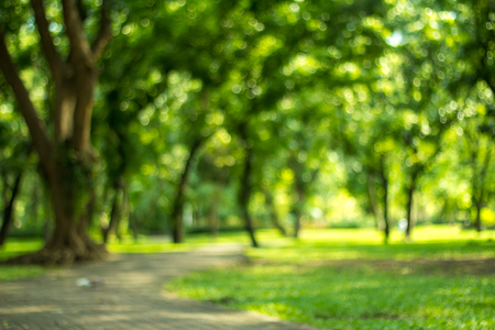 Blurred of green natural tree in park background.