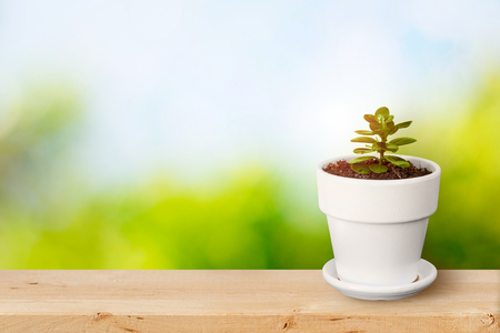 plant in white pot on wooden table with natural green and blue sky background.