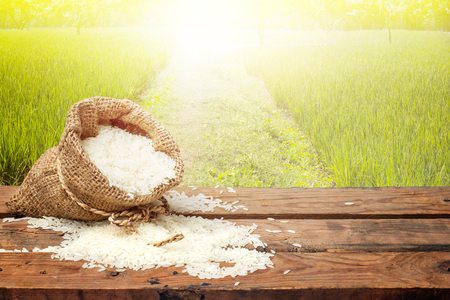 White rice in small burlap sack on wooden table with the rice field background.