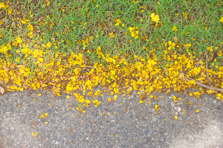 Yellow flower petals on the ground Stock Photo