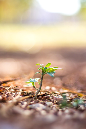 Young plant on nature background in the concept of trying to grow
