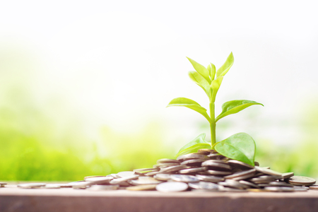 Young plant growing on coins on wooden table with copy space.Business growth,interest and investment concepts. Stockfoto