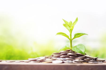 Plante jeune en croissance sur des pièces de monnaie sur table en bois avec copie. Concept de croissance, d'intérêt et d'investissement.