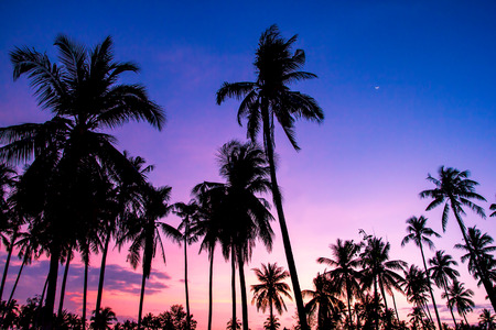 Silhouette of coconut palm trees at sunset on tropical beach. Banco de Imagens