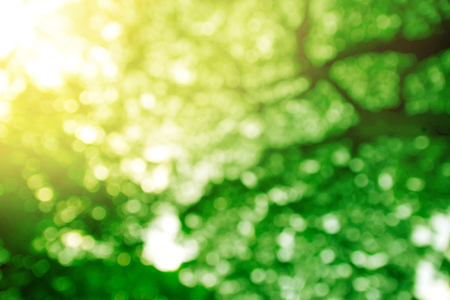 Abstract bokeh natural green leaves background with sunlight.
