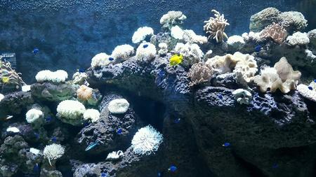 深海サンゴ 写真素材
