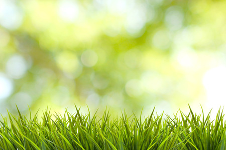 garden design: Grass and green nature blurred background Stock Photo