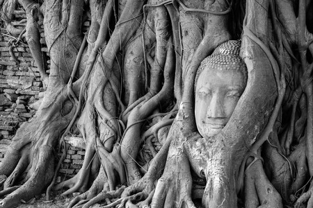 Head of Buddha statue in tree roots at Wat Mahathat (Mahathat temple), Ayutthaya, Thailand photo