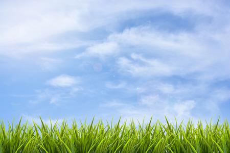 青い空と雲の背景の下で草