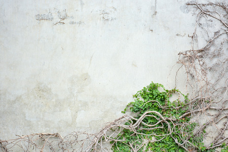 abstract vine pattern growing on concrete wall