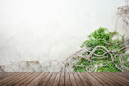 Vine growing on concrete wall and wood floor texture for background 版權商用圖片