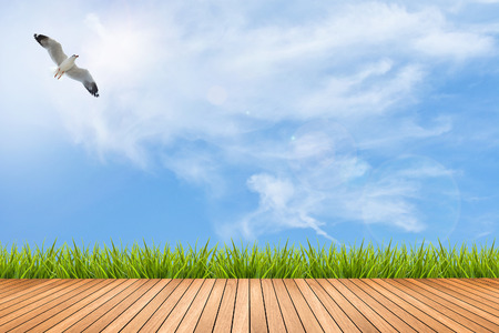Wood texture terrace with fresh green grass under the blue sky and bird of summer, use for background