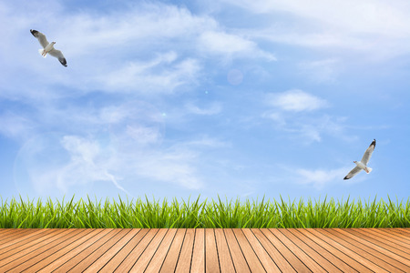 Wood texture terrace with fresh green grass under the blue sky and birds of summer, use for background