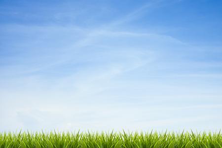 Fresca hierba verde bajo el cielo azul, las nubes y la luz del sol de verano de fondo
