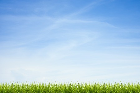 spring green: Fresh green grass under blue sky ,clouds and sunlight of summer background