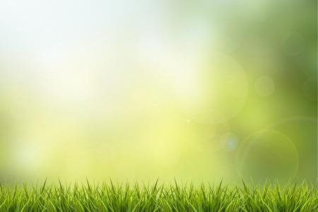 新鮮な春の草や緑の自然がぼやけて背景