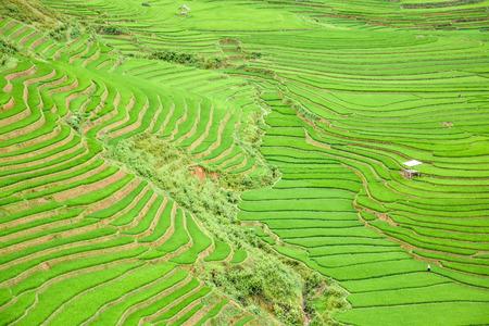 terraced: Beautiful green rice field terraced in Tule village, Vietnam Stock Photo