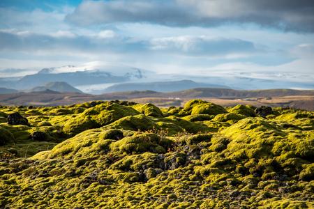 lava field: Eldhraun lava field moss cover on lava rock glacier and mountain in Vatnajokull National Park, beautiful volcanic landscape of Iceland