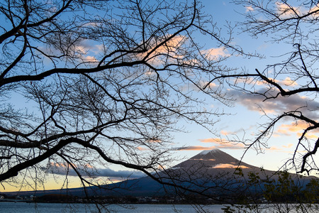 symbolic: Beautiful view of Mount Fuji through branches of trees at Lake Kawaguchi in autumn, This mountain is an famous symbolic of Japan
