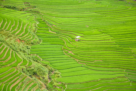 terraced field: Beautiful green rice field terraced in Tule village, Vietnam Stock Photo