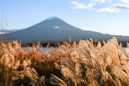 natural landmark: Beautiful view of Mount Fuji and field at Lake Kawaguchi in autumn, This mountain is an famous natural landmark of Japan