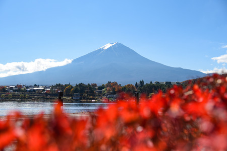 natural landmark: Beautiful view of Mount Fuji at Lake Kawaguchi in autumn, This mountain is an famous natural landmark of Japan