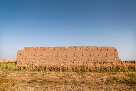 old ruin brown natural clay wall in cornfield under clear blue sky