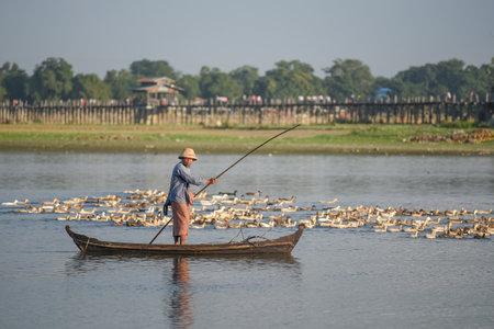 boatman: AMARAPURA, MYANMAR - DECEMBER 23, 2016 : Burmese boatman with group of duck near U Bein Bridge, the oldest and longest teak bridge (Wooden footbridge) in the world near Mandalay.