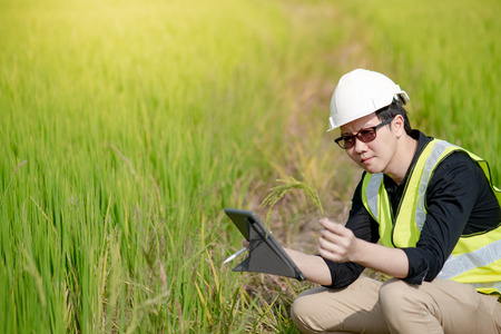 Young Asian male agronomist or agricultural engineer holding rice spike observing green rice field with digital tablet and pen for the agronomy research. Agriculture and technology concepts