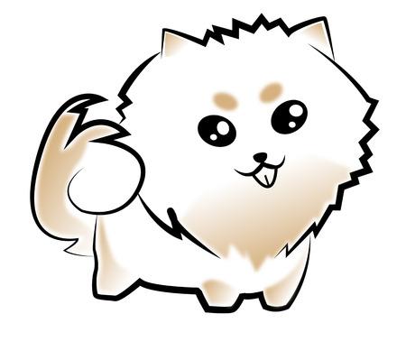 spitz: Pomeranian white and tan colour