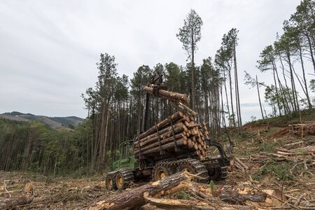 swing arm log loader truck on woods pine forest at work