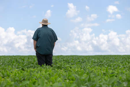 farmer looking over crop field with a beautiful sky on horizon