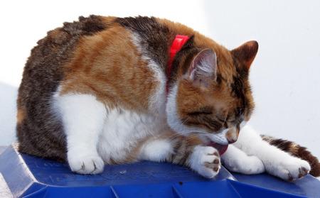 Portrait of a domestic cat