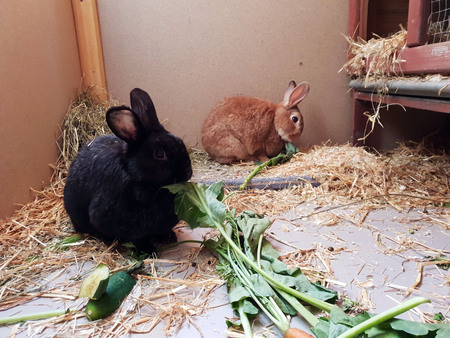 Kaninchen fressen grünes Futter