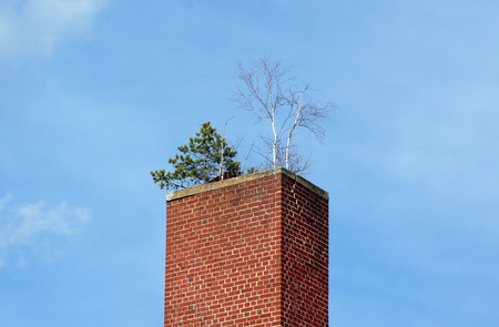 Old chimney overgrown with trees Stock Photo