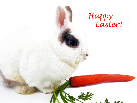 Rabbit with carrot freed on a white background