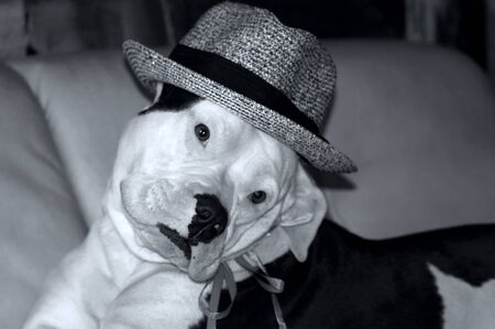 Dog with hat on the sofa 免版税图像
