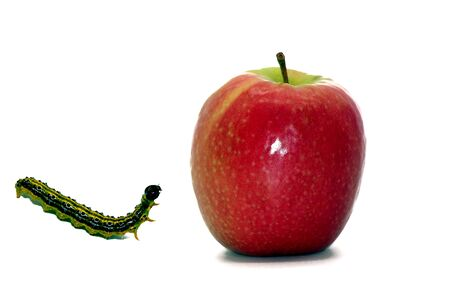 Apple and caterpillar released on white background