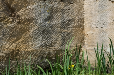 biotope: biotope in an old quarry Stock Photo