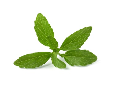 stevia leaves photo