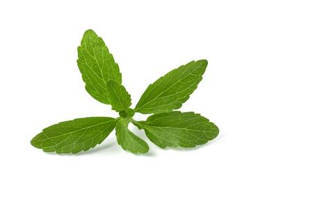 stevia leaves photo