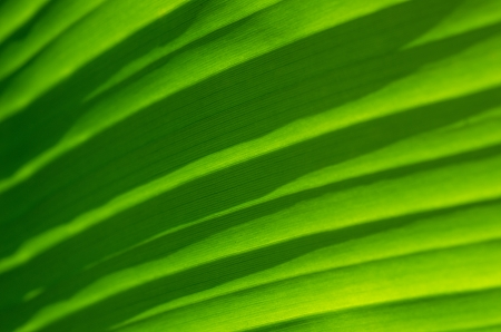 close up view of a banana leaf photo