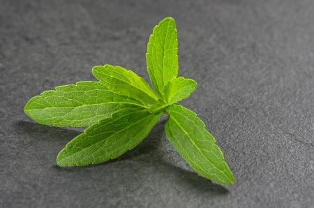 aspartame: Stevia leaves on a slate plate