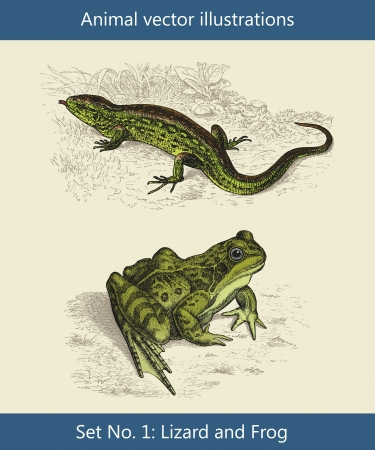engraved image: Animal vector illustrations ,  Lizard and Frog