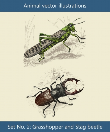 engraved image: Animal vector illustrations, Grasshopper and Stag beetle