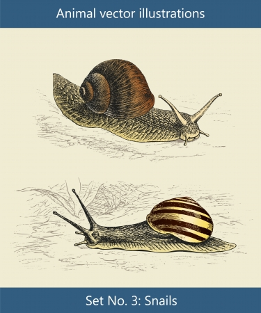 Animal vector illustrations, Snails