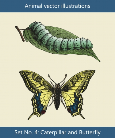 engraved image: Animal vector illustrations, Caterpillar and Butterfly